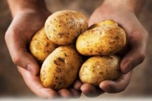 potatis-420x278